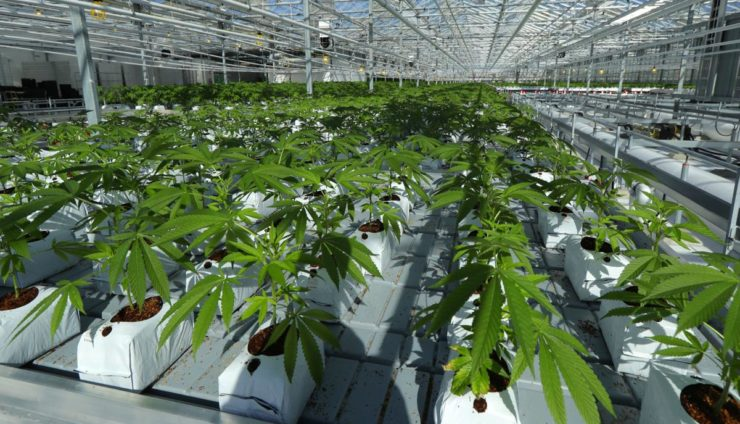 Cannabis Industry Laws