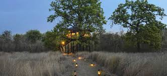 10 Best Tiger Safari Resorts in India